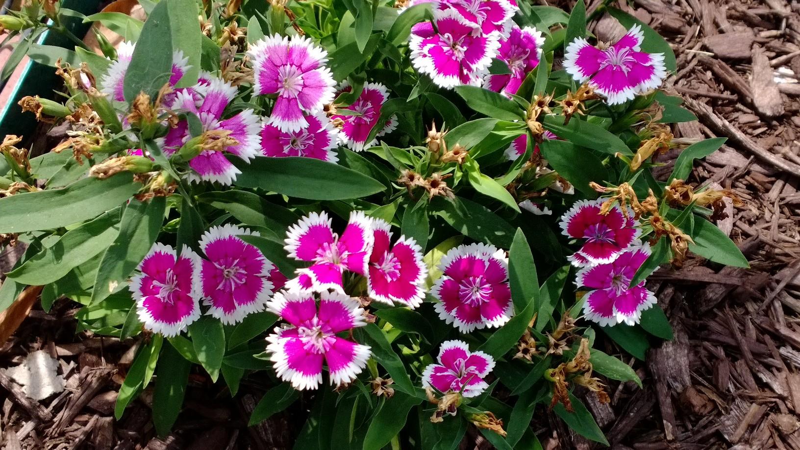Flowers via AT&T Nokia Lumia 1020